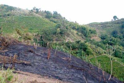 Slash and burn cultivation
