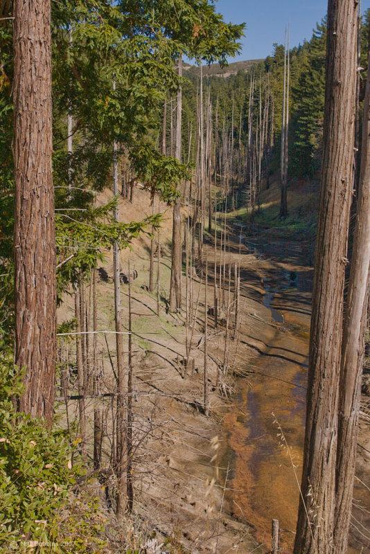 Marin Stream