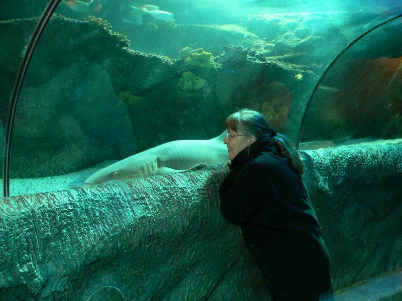 Akvariet vid Loch Lomond
