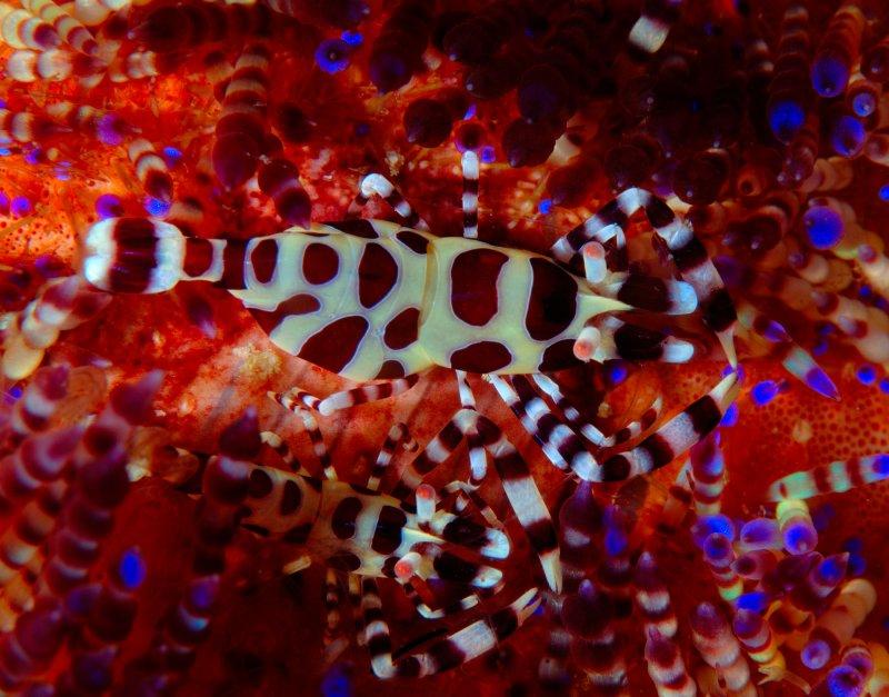 Coleman Shrimp 10a.jpg