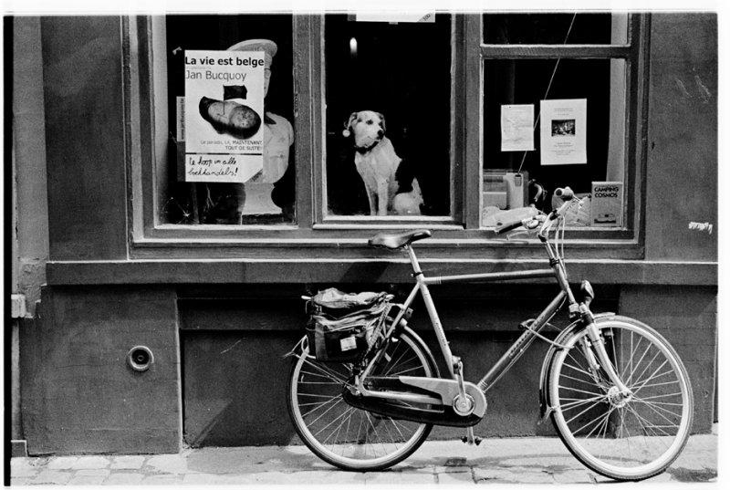 La Vie Est Belge, Brussels 2007