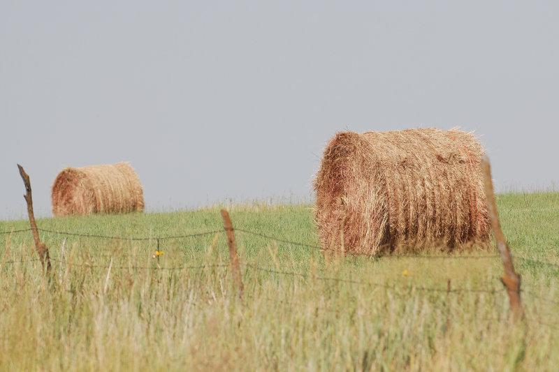 Kansas Hay