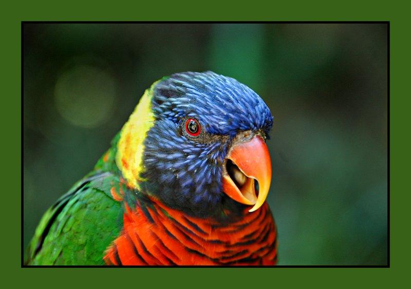 zoo bird 06 bright web.jpg