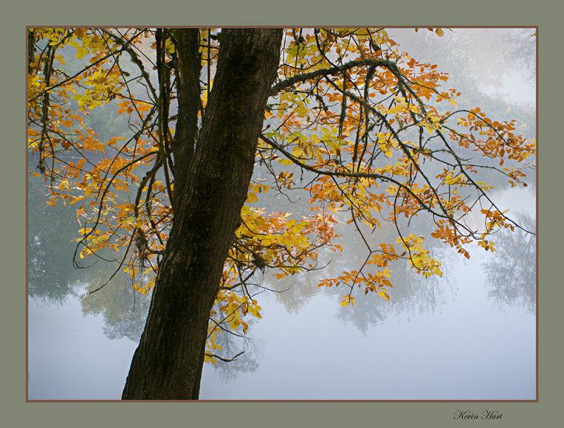 CAON 20D 06 PARK TREE AND CALAPOIA web.jpg