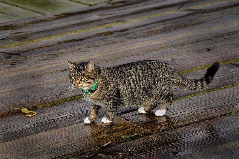 catsawyers web.jpg