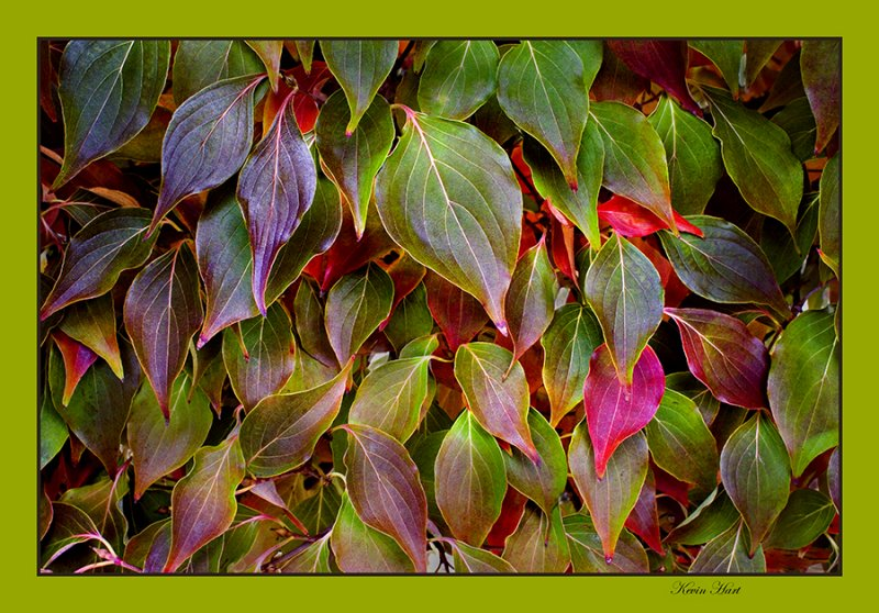 Green leeves with red 06.jpg