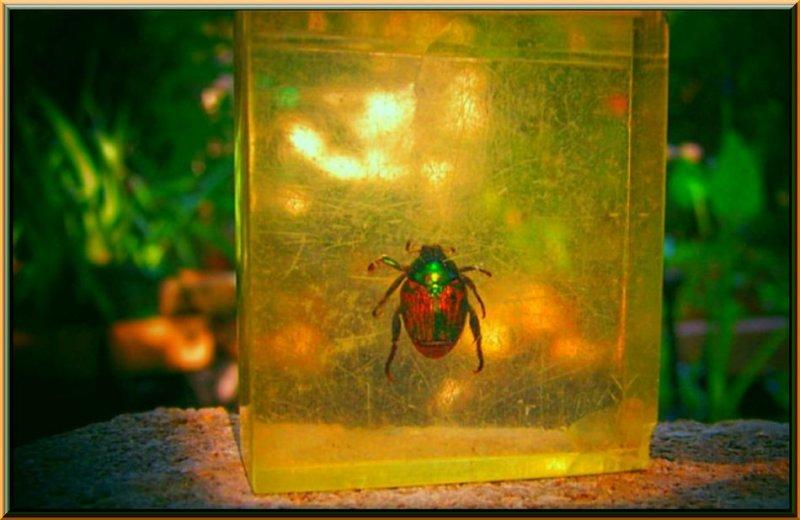 Japanese Beetle 2