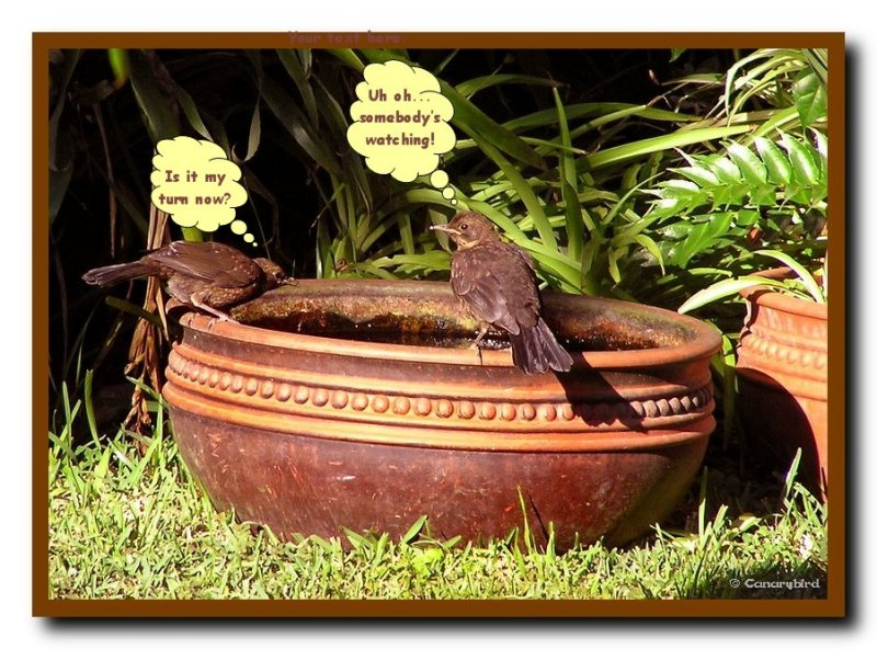 Bird Bath 3.jpg