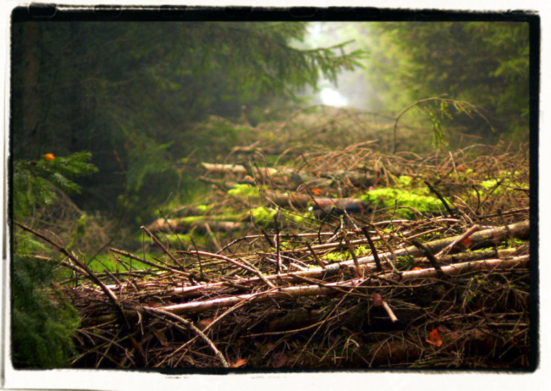 Forest 7