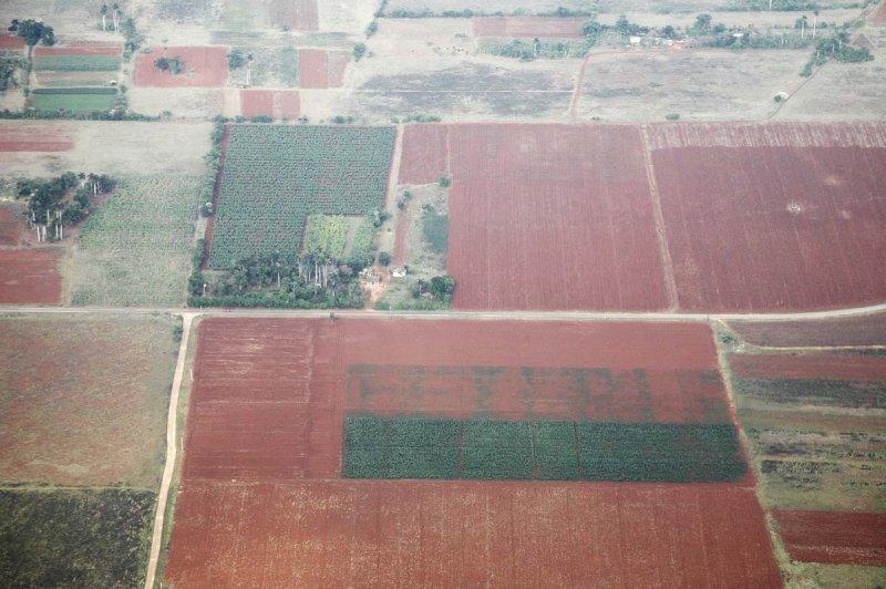 Cuban farms
