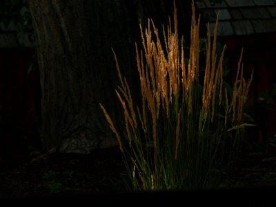 Reeds, Mount Carmel, Utah, 2006