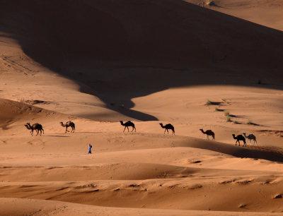Camel herd, Erg Chebbi, Sahara Desert, Morocco, 2006