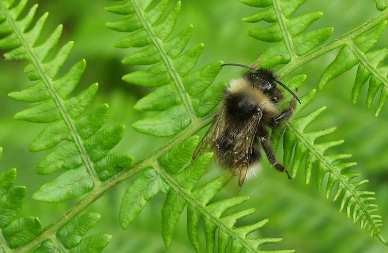 wendy bee