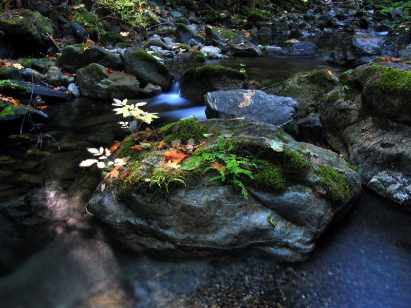 Little Grider creek rock, water, and leaves