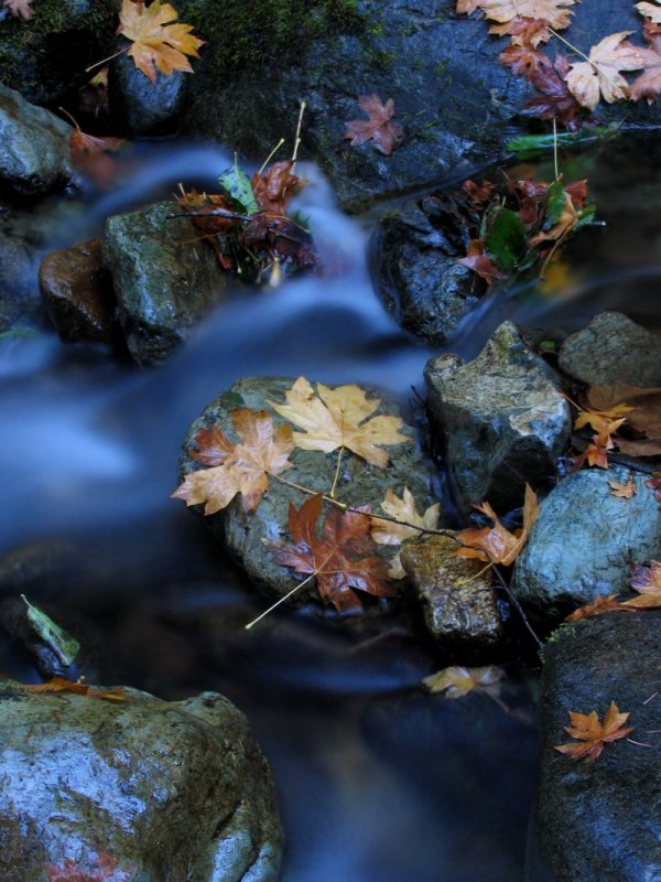 Leaves, water, rocks, and no time left
