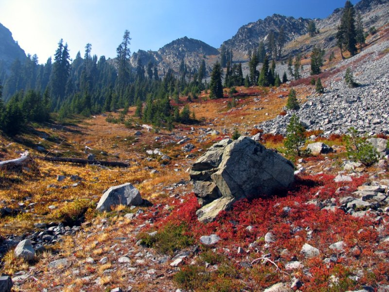 Fall colors along PCT near Man Eaten Pass