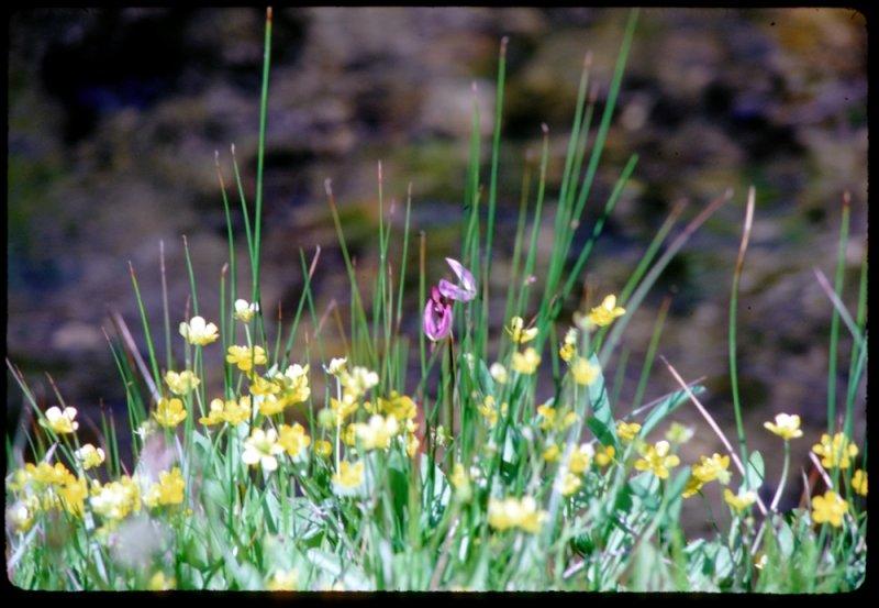Harts Meadow flowers