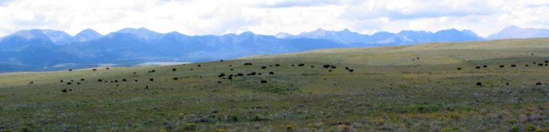 Buffalo: Wolf River Ranch