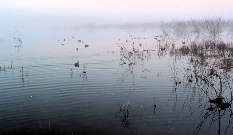 Foggy decoys