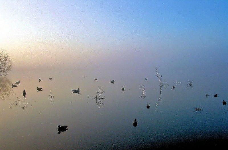 Decoys/Fog