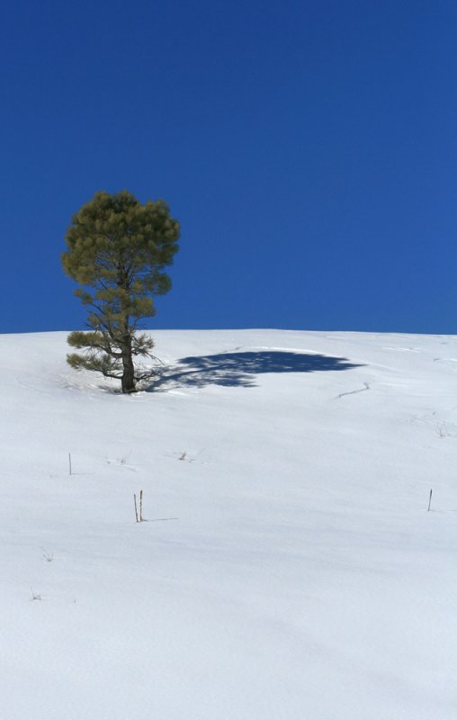 PineShadow