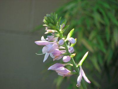 Superior flower.
