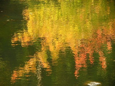 ...the pond ...