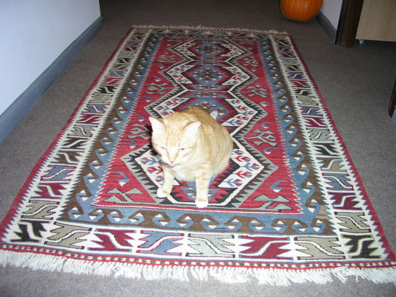 I told you to buy a carpet made with mouse wool!