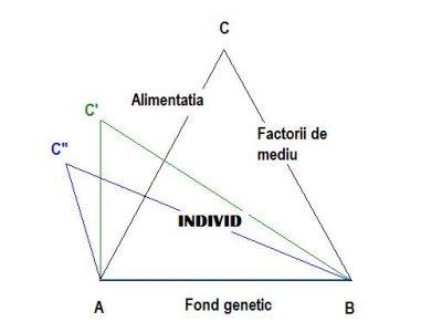 Triunghiul vietii