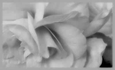 Feeling a flower...