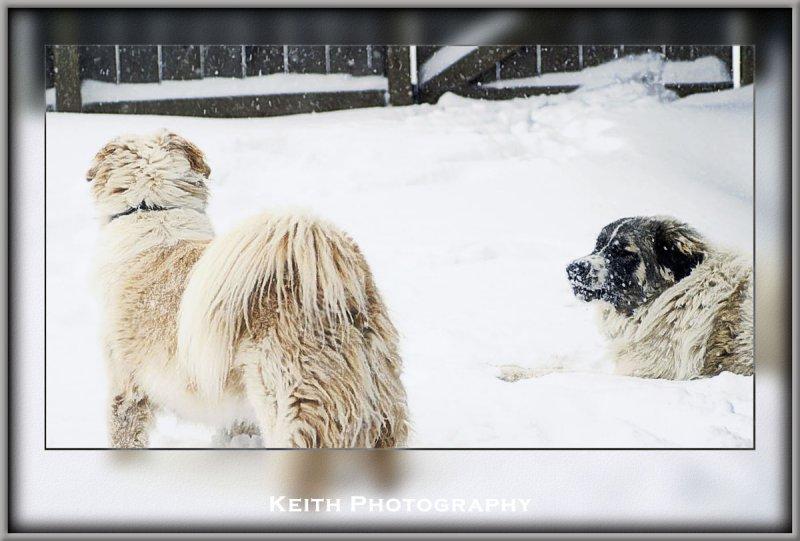 snow6rtf.jpg