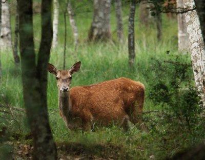 faune de notre région et d'ailleurs