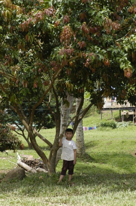 Boy under tree