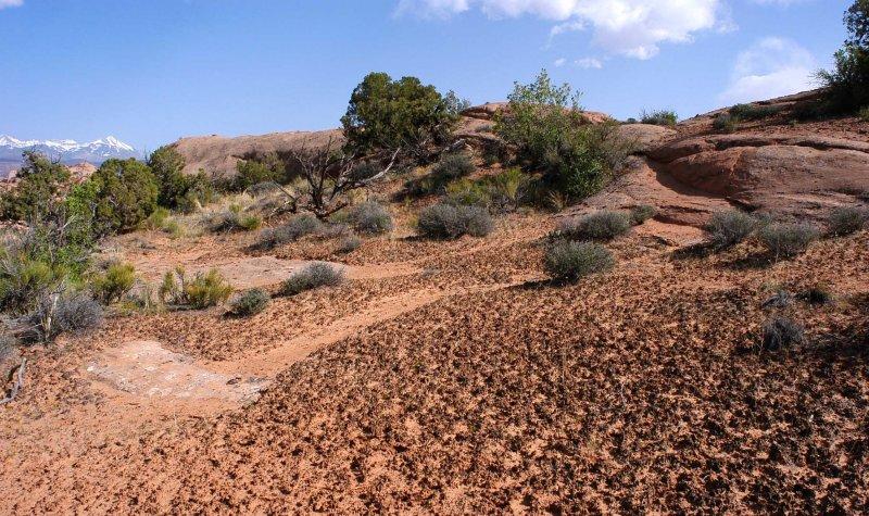 Faint diagonal animal path as hiking route through the cryptobiotic soil