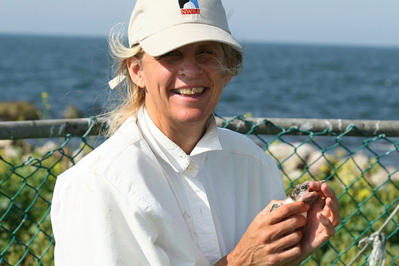 Julie with a Roseate Tern chick