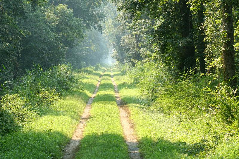 Great Dismal Swamp road