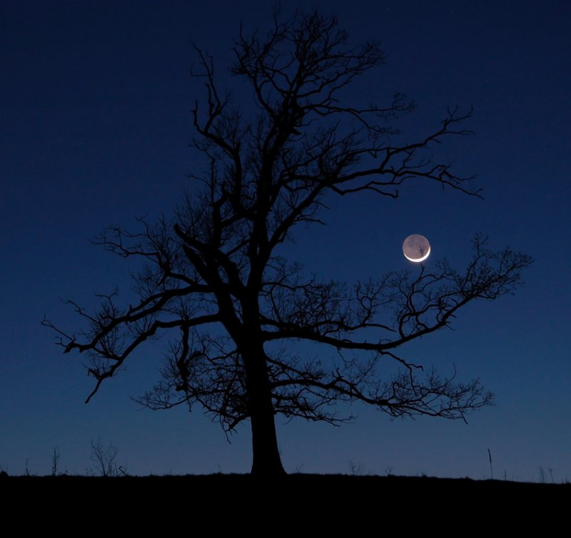 Earthshine & Tree (Middle Fork)
