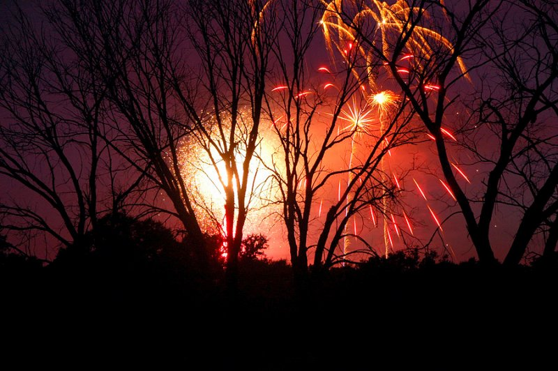 Fireworks Amongst the Trees