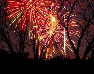 Fireworks Amongst the Trees