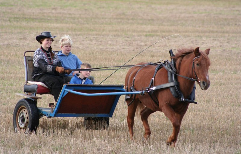 carriage-ride.jpg