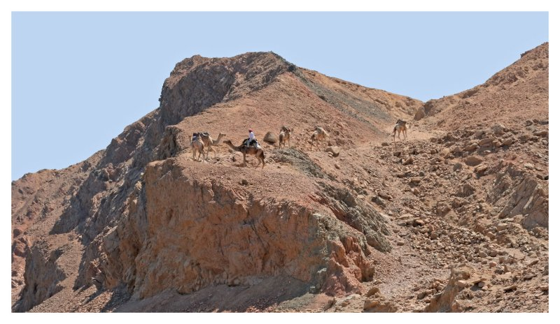 Camel riding is FUN!