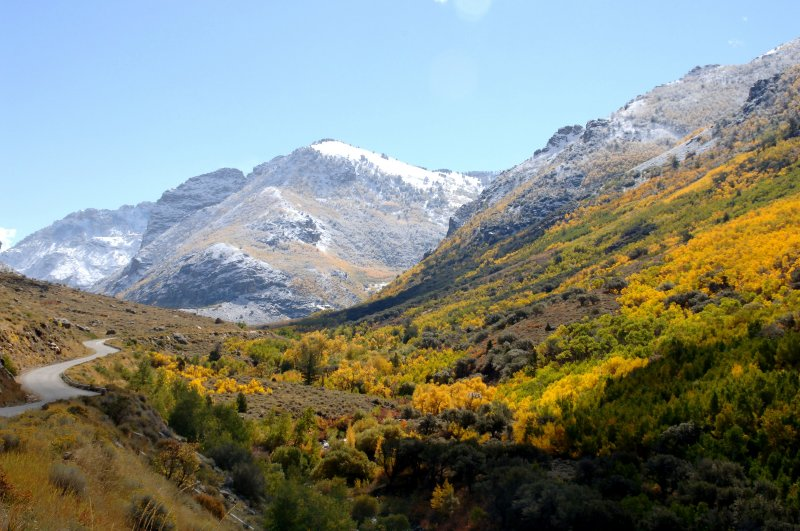 Lamoille Canyon in Autumn Colors
