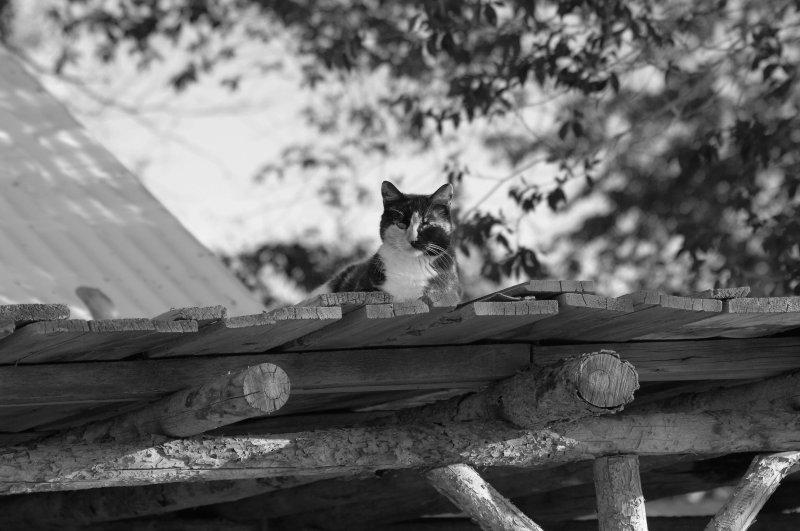 Cat hideaway