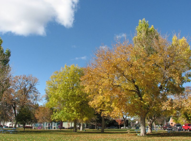 Caldwell Park in Autumn smallfile IMG_1396.jpg