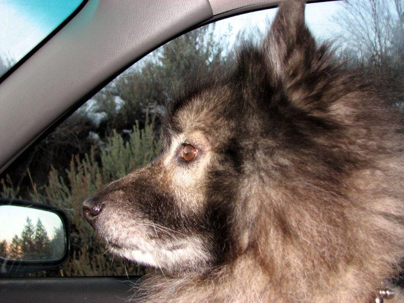 Putnam loves his car rides smallfile IMG_1772.jpg