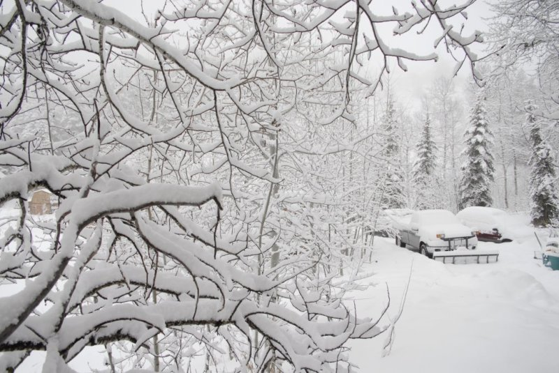 At Home in Winter _DSC0002.JPG