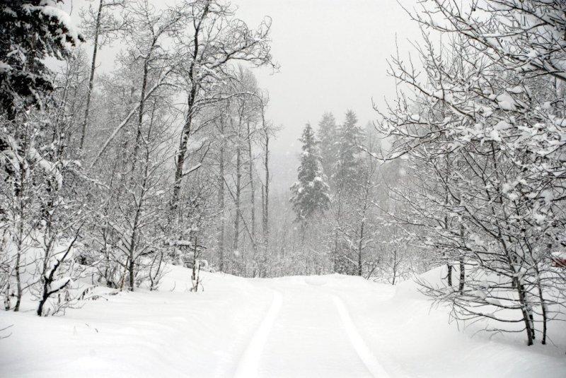 Our Driveway in Winter _DSC0015.JPG