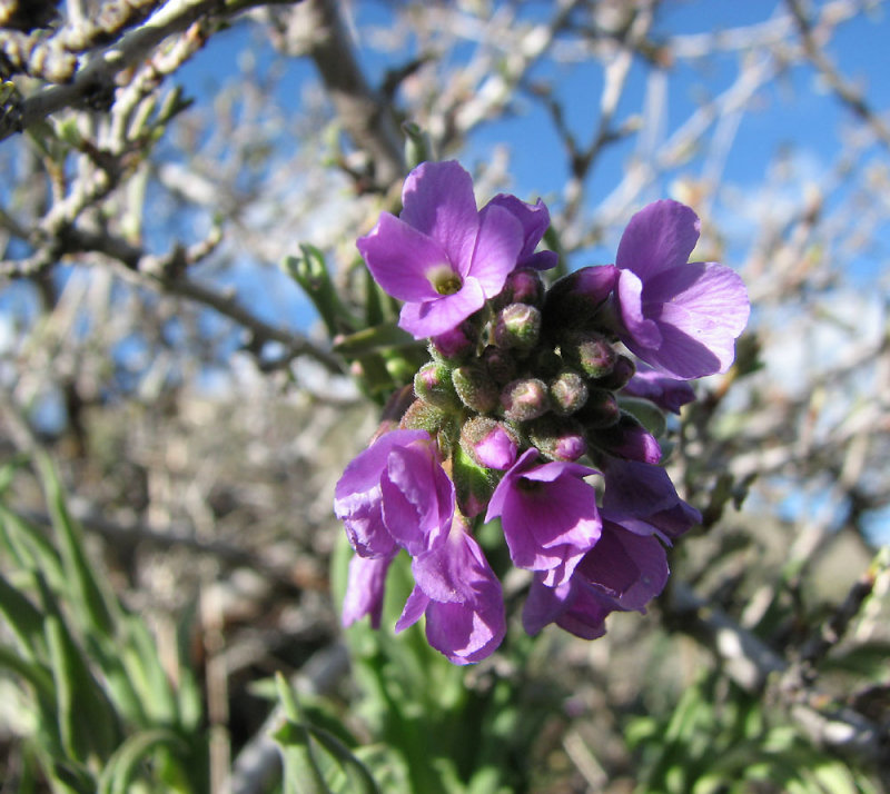 Wilde Blumen smallfile IMG_2796.jpg