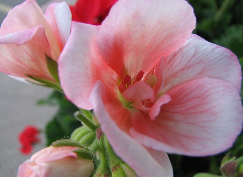 Fred Meyers Flowers IMG_3107.jpg
