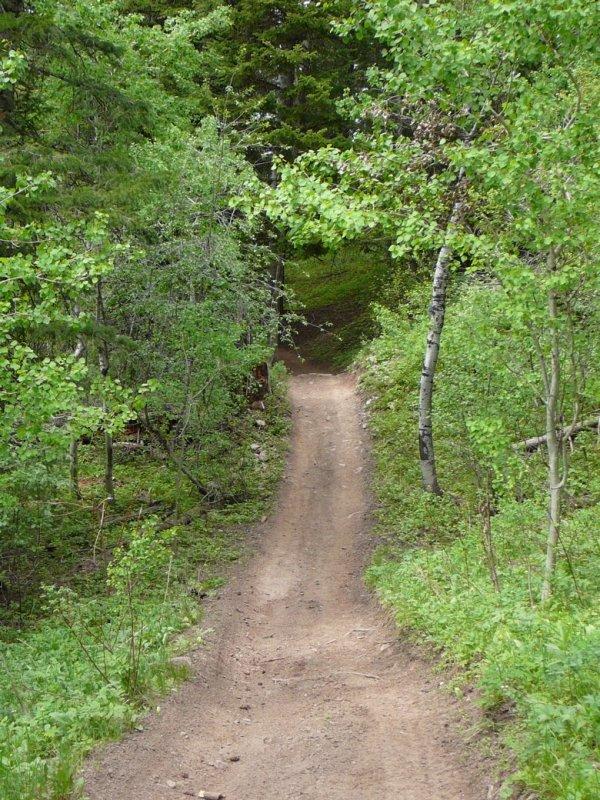 East Fork Mink Creek Trail Scout Mountain P1010496.jpg